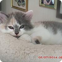 Adopt A Pet :: Lola - Acme, PA