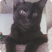 Adopt A Pet :: Midge - North Highlands, CA