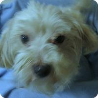 Adopt A Pet :: Marshall - Foster, RI