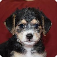 Adopt A Pet :: FINN - Nashville, TN