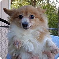 Adopt A Pet :: Bre - Crump, TN