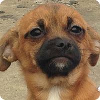 Adopt A Pet :: Dana - Staunton, VA