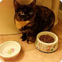 Adopt A Pet :: Gretal - Medford, NJ