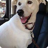 Adopt A Pet :: Lovey - Garwood, NJ