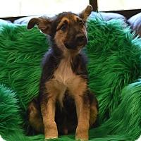 Adopt A Pet :: Waylon - Groton, MA