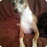 Adopt A Pet :: Maisie - Flower Mound, TX