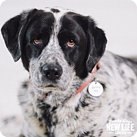 Adopt A Pet :: Sonny - Portland, OR