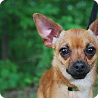 Adopt A Pet :: Leo - New Castle, PA
