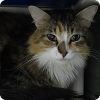 Adopt A Pet :: Topaz - Elyria, OH