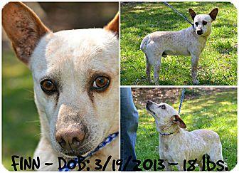 Australian Cattle Dog Mix Dog for adoption in Siler City, North Carolina - Finn