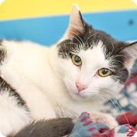 Adopt A Pet :: Bogart - West Des Moines, IA