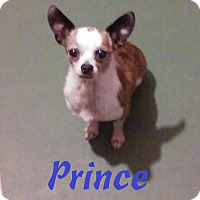 Chihuahua Mix Dog for adoption in Overland Park, Kansas - Prince