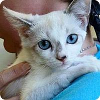 Adopt A Pet :: Petunia - Rosamond, CA
