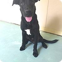 Adopt A Pet :: Marco - Sparta, NJ