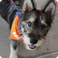 Adopt A Pet :: William - Lake Forest, CA