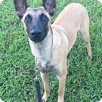 Adopt A Pet :: Lucas - Pompano beach, FL