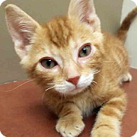 Adopt A Pet :: Walker - Plainfield, IL