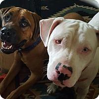 Adopt A Pet :: TEAGAN - Morgantown, IN