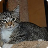 Adopt A Pet :: Benny - Whittier, CA