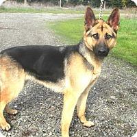 Adopt A Pet :: Elise - Pleasant Grove, CA