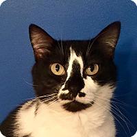 Adopt A Pet :: Ashley Girl - Summerville, SC