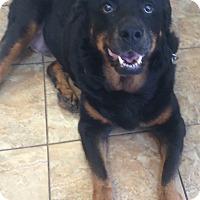 Adopt A Pet :: Adopt a Senior! - Oak Ridge, NJ