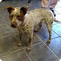 Adopt A Pet :: Kellie - Jackson, TN