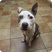 Adopt A Pet :: Connor *Petsmart GB* - Appleton, WI