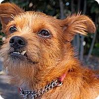Adopt A Pet :: LEONARDO - Beverly Hills, CA