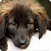 Adopt A Pet :: Friedrich - Albany, NY