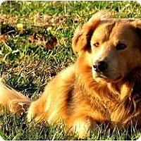 Adopt A Pet :: Huffaker