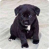 Adopt A Pet :: Arlene - Portland, OR