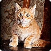 Adopt A Pet :: AJ - Owensboro, KY