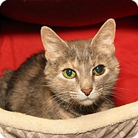 Adopt A Pet :: Lena - Milford, MA