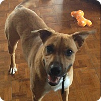 Adopt A Pet :: Catrina - Reno, NV