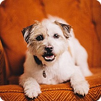 Adopt A Pet :: Buddy Boy - Portland, OR