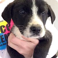 Adopt A Pet :: Donald - Huntsville, AL