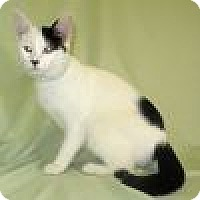 Adopt A Pet :: Delaine - Powell, OH