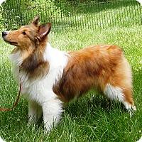 Adopt A Pet :: Beth - Charlottesville, VA