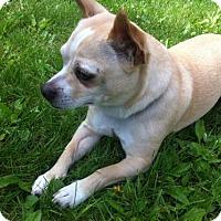 Adopt A Pet :: Flint - Pardeeville, WI