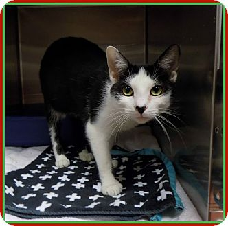 Marietta Cat Adoption