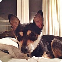 Adopt A Pet :: Kimmie - Manhattan, NY