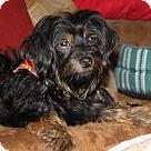 Adopt A Pet :: HERMOINE