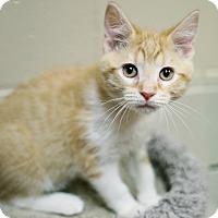 Adopt A Pet :: Simon - Appleton, WI
