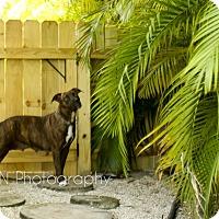 Adopt A Pet :: Grace - Miami, FL