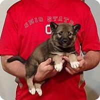 Adopt A Pet :: Rocco - South Euclid, OH