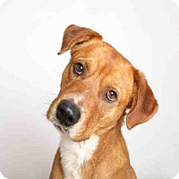 Adopt A Pet :: MIGUEL - Murray, UT
