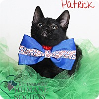 Adopt A Pet :: Patrick - Covington, LA