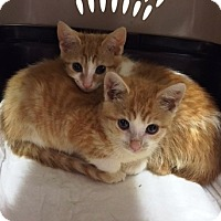 Adopt A Pet :: Octavia and Orlando - Somerset, KY