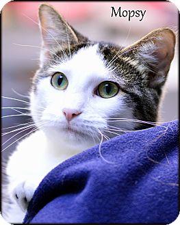 Domestic Shorthair Cat for adoption in Ottumwa, Iowa - Mopsy